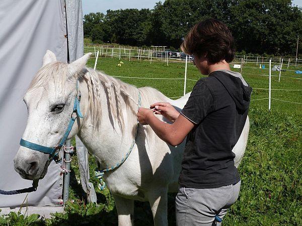 Frisuren machen Leute. Dem Pferd gefielen seine neuen Zöpfe ganz offensichtlich. Ob sie die anwesenden Stuten beeindruckt haben, ist nicht überliefert.