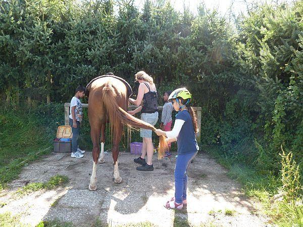 So ein Pferdeschwanz will gepflegt sein. Erster Punkt auf der Aktivitätenliste war folglich das Putzen und Striegeln. Die Pferde haben es sehr genossen. Man möchte sich seinen Gästen schließlich adrett präsentieren.