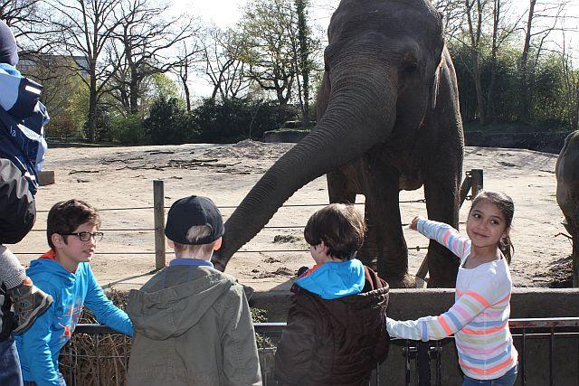 So ein großes Hirn braucht natürlich Nahrung. Bei Hagenbeck dürfen Elefanten gefüttert werden, was sie bei den Kindern noch beliebter macht als sie ohnehin schon sind.