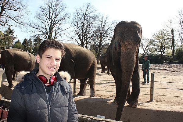 Die Elefanten sind majestätisch, friedlich und hoch intelligent. Und sie lassen sich gern fotografieren.