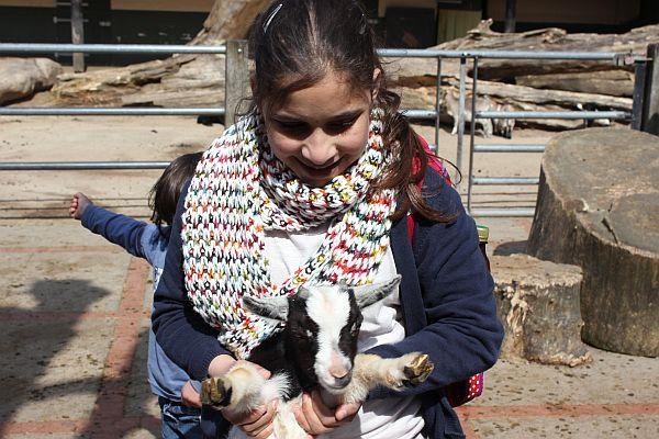 Die Ziegen waren die absoluten Favoriten. Sie lassen sich streicheln und hochheben und sind so zutraulich wie die Ziegen, die einige der Kids von zuhause in Syrien kennen.